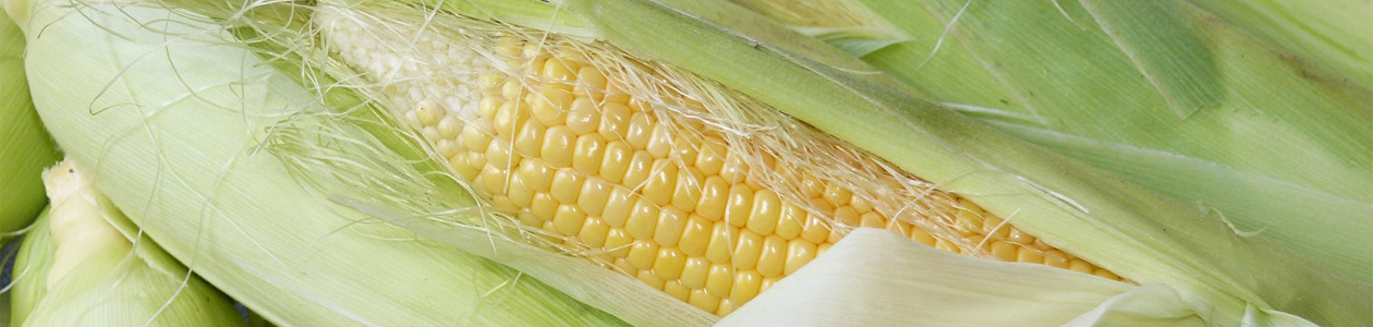 """seed corn industry essay Conserving the seed corn: reflections on the academic hiring and graduate students abandon academia for industry while known as the """"seed-corn"""" problem."""